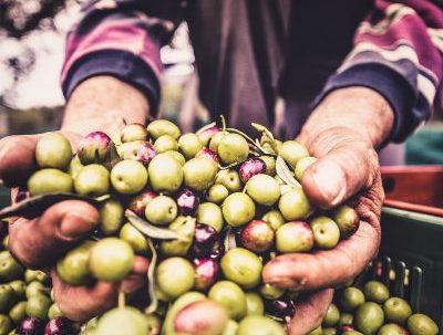 Conoce los mitos y verdades que hay detras del aceite de oliva