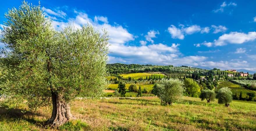 Los olivares y la apuesta por la sostenibilidad de los cultivos de aceite de oliva