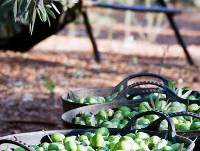 Olivo: productos derivados que aportan a la ecología